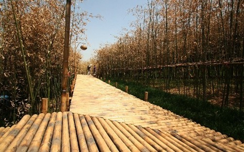 bamboo pole pathway